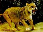 В Кущевском районе Кубани полицейские ловили сбежавшую львицу