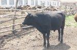 Животноводство в цифрах в Белокалитвинском районе