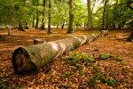 Белокалитвинской городской прокуратурой выявлены факты незаконной рубки леса