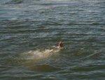 В Белокалитвинском районе утонул подросток