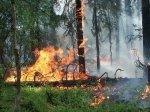 В Верхнедонском районе районе Ростовской области крупные лесные пожары