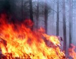 В Волгоградской области резко возросло число природных пожаров