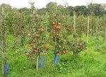 В Краснодарском крае предлагаеться увеличить количество садоводческих хозяйств