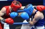 Чемпионат России по боксу собрал более 300 лучших боксеров со всей страны