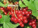 На территории Волгоградской области, откроют производственный ягодный питомник