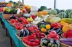 На Кубани выделят 600 миллионов рублей на поддержку садоводства и овощеводства