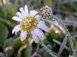 В Ростовской области ожидаються заморозки