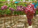 В Ейском районе построят винзавод стоимостью более 1,2 млрд рублей