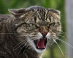 В Константиновске семью спасли от бешеного кота.