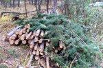 Выявлены 2 факта незаконной рубки лесных насаждений