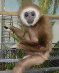 В Ростов приехали 13 редких видов обезьян