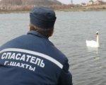 В Шахтах пытаются спасти лебедей Русю и Люсю, не улетевших на юг