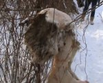 В Ростове неизвестные выпотрошили собаку и отрезали ей конечности