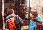 Диалоги о животных – рецепт нравственного воспитания детей в школе №1
