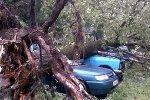 В Пролетарском районе Ростова дерево упало на припаркованные машины