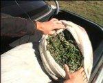 В Аксае задержали мужчину с пакетом марихуаны в руках