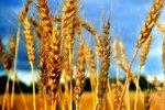Представители Каменского района приняли участие в совещании по вопросам подготовки к весенней полевой кампании