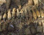 В Ростовской области обнаружен взрывоопасный схрон боеприпасов