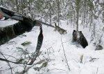 В Волгоградской области завершаются сроки охоты на кабана и пушных зверей