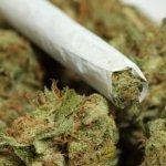 В Геленджике судили женщину за хранение марихуаны