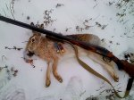 За убийство 4 зайцев кубанский охотник получил 2 года