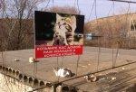 Как белокалитвинцы заботятся о бездомных кошках