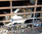 Ростовчане требуют освободить кошек, замурованных в подвале