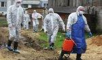 Россельхознадзор выявил вспышку АЧС в Волгоградской области