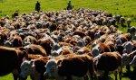 Минсельхоз РФ направит более 100 млн рублей на развитие фермерских хозяйств Кубани