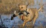 В Волгоградской области завершен сезон охоты на пернатую дичь