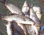 Рыбный рынок хотят открыть в Ростове под Ворошиловским мостом