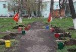 Врачи г. Шахты высадили березовую аллею за зданием БСМП им. Ленина