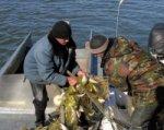 В Новочеркасске полицейские из подпольных цехов изъяли две тонны рыбы