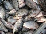 В Адыгее выявили два факта незаконного лова рыбы