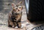 Бездомных кошек и собак на улицах г. Шахты начнет отлавливать подрядная организация