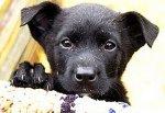 В город Шахты привезли 37 собак, которых хотели усыпить