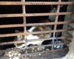 В Ростове в подвале дома кошек замуровали двойной решеткой
