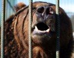 В Ростовской области суд закрыл дело о нападении медведя на ребенка