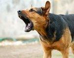 В Ростовской области бешеная собака покусала внука и бабушку
