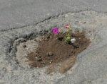 Ростовчане в ямы на дорогах стали высаживать цветы