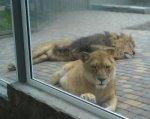 Ветслужба Дона нашла ряд нарушений в ростовском зоопарке