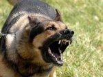 В Краснодарском крае врачи пришили шестилетнему мальчику губу, откушенную разъяренным псом