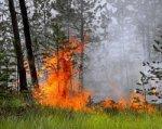 В Ростовской области прогнозируют чрезвычайную пожароопасность
