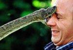 Селфи со змеей закончилось для 2 рыбаков больницей в Ростовской Области