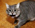 В Белокалитвенском районе бешеный кот поцарапал пожилую хозяйку