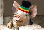Пенсионер кормил свиней «травкой» в Ростовской области
