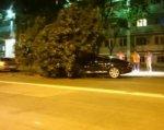 В Ростове на Шолохова дерево упало на Bentley