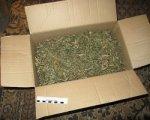 У жителя Морозовска нашли 1,4 кг марихуаны и 11 кустов конопли