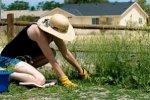 Белокалитвинцев накажут за сорняки и мусор