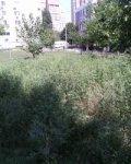 Ростовчане с улицы Стартовой сетуют на заросли амброзии